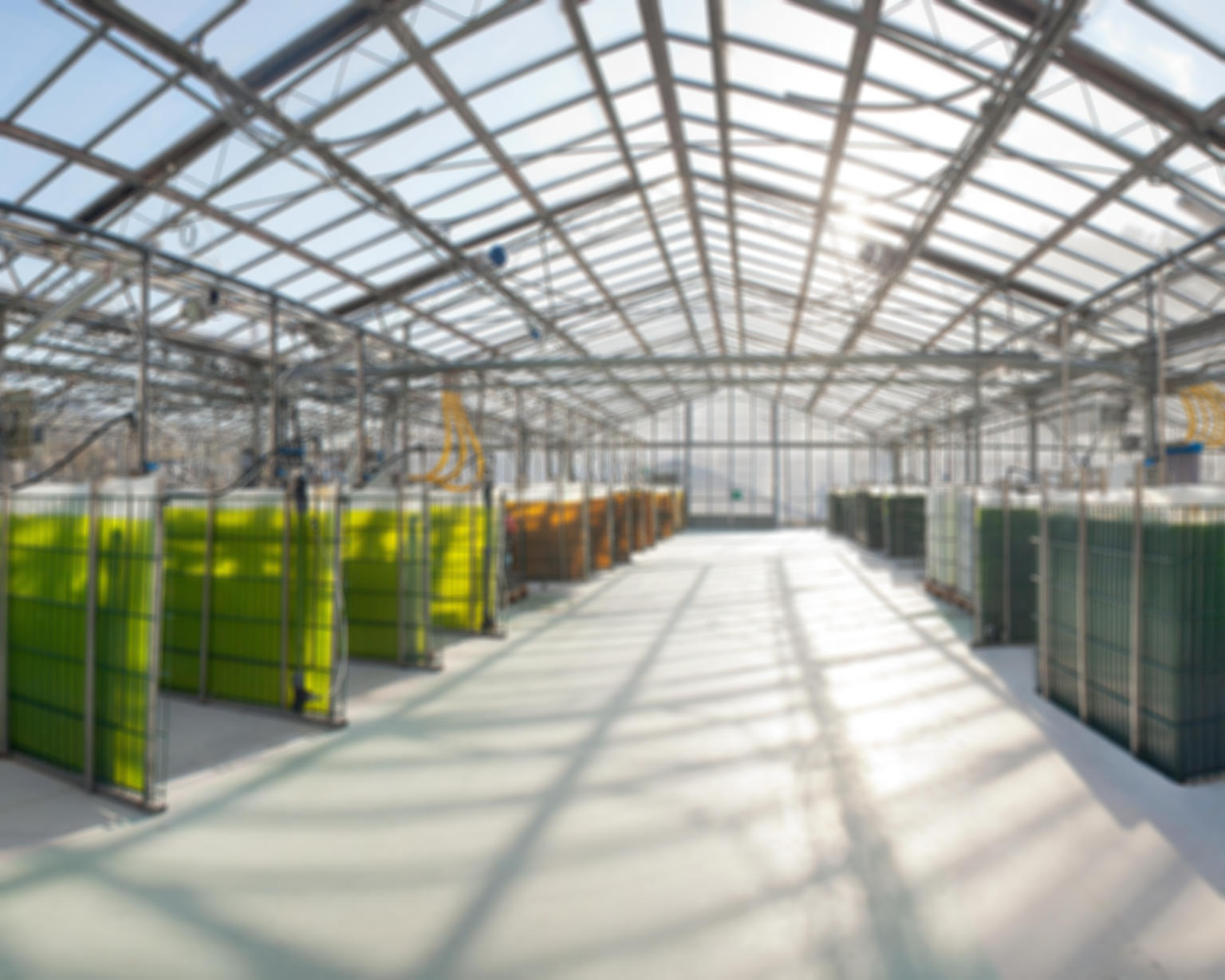 greenhouse algae